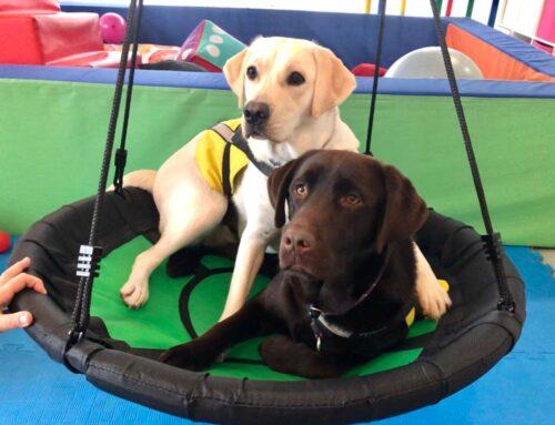 """Projekt """"Širenje usluge uključivanja terapijskih pasa za djecu s teškoćama u razvoju"""""""