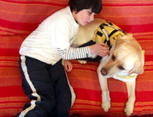 Razvoj mobilne podrške obiteljima korisnika terapijskih pasa