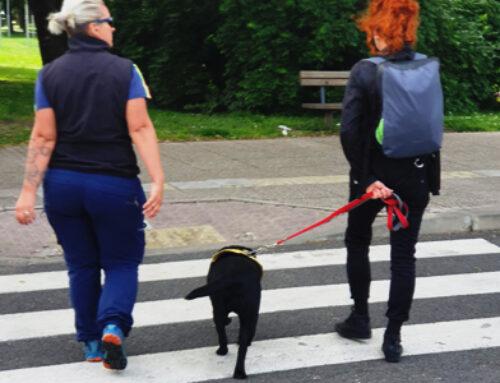 Testiranje i odabir pasa za trening budućih terapijskih pasa